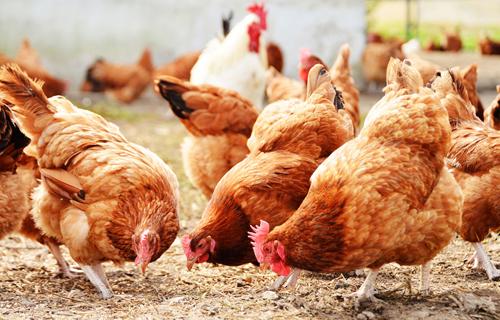aggiornamento sicurezza alimentare ferruzzi uova